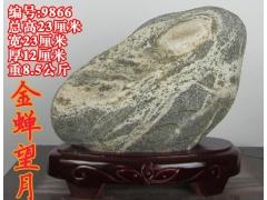 9866【金蝉望月】