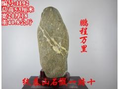 1192【大鹏展翅】